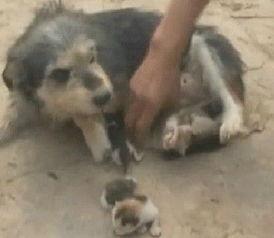 姐妹俩跟狗做爱-...件不可信 狗猫交配不可能