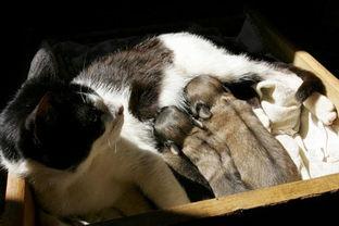 姐妹俩跟狗做爱-巴西猫咪与狗交配生下狗崽 猫崽全夭折
