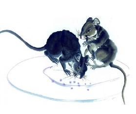 人与羊配种-属鼠的人配什么属相的人最好   配猴:鼠欣赏机伶的猴,如猴诚心对鼠...