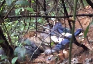 主播直播采蘑菇遇腐尸 案件仍在进一步调查之中.5月23日下午四点...