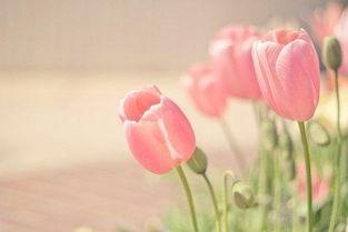 人存好心,善良为本.慈善胸怀.... 社会温暖,人心温暖,得道多助,...