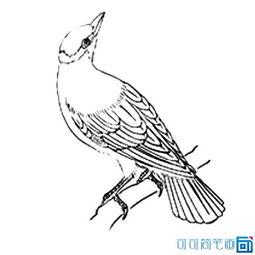 儿童学画鸟类的简笔画画法图片大全,黄鹂鸟简笔画素材图片, 黄鹂...