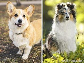姐妹俩跟狗做爱-...点不同品种的狗交配后,产生的后代
