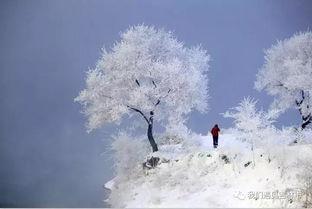 左右,树挂开始一片一片脱落,接... 天空的背景格外湛蓝,雪片在空中...