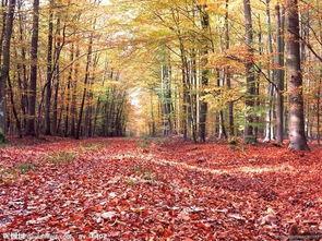 叶落苍穹-秋天 落叶覆盖的小径图片