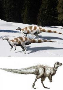 ...种小型的植食类恐龙,身高大约1.5米.这种恐龙生活在晚白垩纪时...