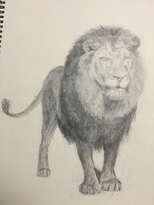 狮子素描练习