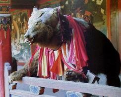 怡红院免费九九色色-狗熊标本,此熊小时为九世班禅曲吉尼马的玩物,老死后,被制成标本...