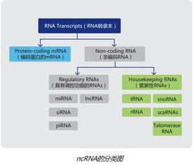 人类长链非编码RNA芯片检测
