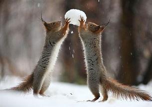 ...也不是兔兔,而俄罗斯摄影师Vadim Trunov镜头下的这一系列雪地...