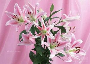 花卉图片及名称大全