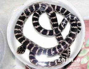 闪皮蛇-梦见蛇退皮是什么意思   梦见蛇退皮意味着,被岁月雕刻过的东西更能...