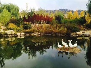 ...达部落北京原乡美利坚会员基地 -美式房住宿 豪华自助早餐 温泉套票 ...