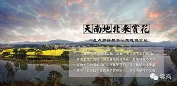 茶话 中国最美油菜花观赏地 从江南到塞北
