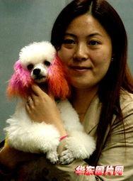 有女人和狗操逼的视频吗-一位女士抱着获奖的参赛犬留影-南京名犬展评 三百名犬 走秀