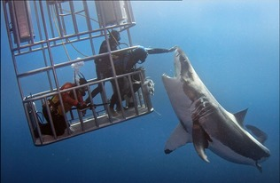 ...多数人所畏惧的海底生物,他们给人的印象往往是体型庞大,行动...