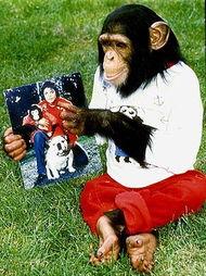 ...的合照,像是在怀念故人?-杰克逊宠物获巨额遗产 成最富有猩猩