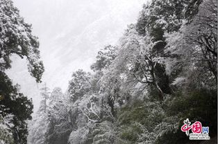 境里花缘-回程时,穿越那几公里之遥的高山隧道后,一场不期而至的大雪惊到了...
