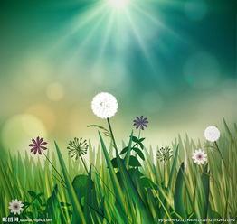 阳光下的蒲公英花矢量图图片