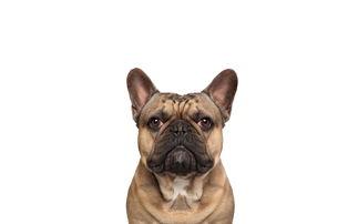 宠物狗狗桌面壁纸之可爱的萌样