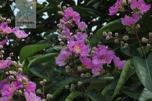 花与树影评-这是什么树,下图是它的花和果实