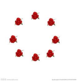 花卉动态背景视频