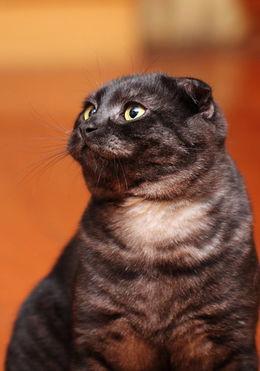 犬猫寄生虫如何预防