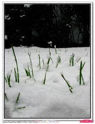 头一次见那么大的雪,整个城市银妆素裹!*QT7\ht  3B  A  i ^t本帖最后...
