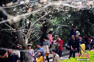 ...维护】每年初春武汉大学的