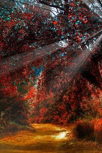 好看唯美意境森林图片高清手机壁纸下载