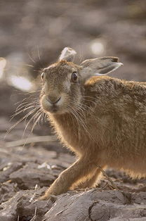 2013英国野生动物摄影大赛获奖作品