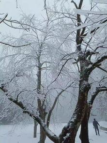 武冈的雪景也太漂亮了吧