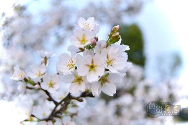 ...璃音摄影作品 春暖花开