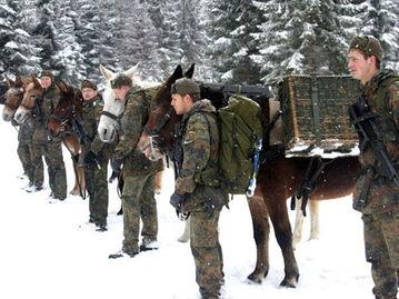 ...,骡子还是德军山地部队标准装备-高度 骡马化 的德军山地部队