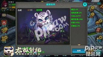太极熊猫明日新版上线 100级内容抢先看