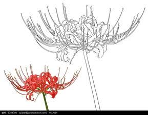 花草树木简笔画-曼珠沙华花卉花朵线描图片免费下载 编号3704300 红...
