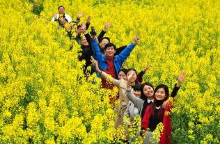 经济,花田边,农民摆起了坝坝茶,游客悠闲地喝花茶、说花语、拍花...