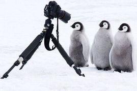 动物世界 原来也有摄影 高烧患者