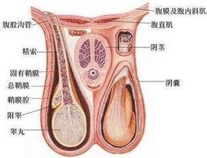 胸疼是怎么回事啊?胸口疼是怎么回事