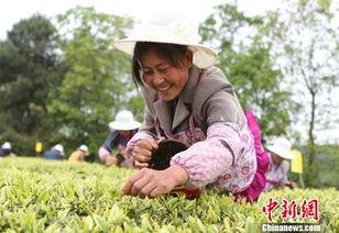 ...庆举行首场农村留守妇女采茶技能比赛
