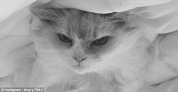 生气猫 走红 萌宠界的 网红 盘点