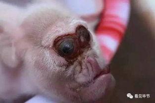 ...崽 猪身猴脸似外星物种