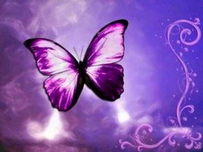 蝶魇序曲-佛对我说:你的心上有尘.我用力地擦拭.佛说:你错了,尘是擦不   ...