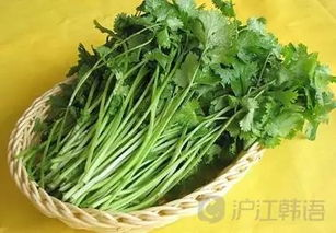 ...道中国菜迷住的韩国艺人们,好吃到不能自拔
